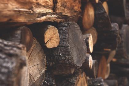 Tăng tính minh bạch cho gỗ nguyên liệu nhập khẩu