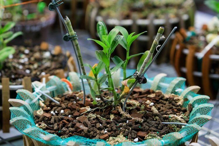 Bên trong vườn lan đột biến được định giá gần 100 tỷ đồng ở Phú Thọ