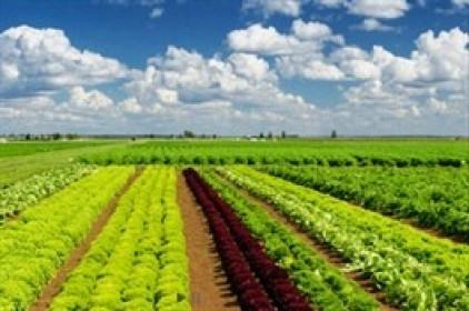 PAN Farm muốn gia tăng tỷ lệ sở hữu tại công ty mẹ