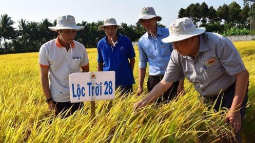 LTG lên kế hoạch lãi ròng 400 tỉ đồng năm 2021