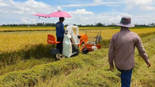 Giá lúa gạo hôm nay 14/5: Giá nhiều loại gạo giảm 1.000 đồng/kg