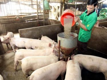 Bộ Công Thương khuyến cáo xuất khẩu lợn sang Campuchia theo đường chính ngạch