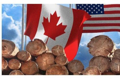 """""""Cuộc chiến"""" gỗ mềm giữa Canada và Mỹ lại bùng phát"""