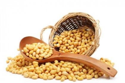 Giá đậu nành tăng 124%, ngành chăn nuôi kêu gọi Ấn Độ miễn thuế nhập khẩu