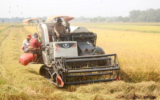 """HoREA đề xuất lấy đất nông nghiệp làm dự án, chuyên gia nói """"nguy hiểm"""""""