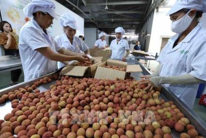 Kim ngạch xuất khẩu hàng hóa cả nước 5 tháng tăng 30,7%