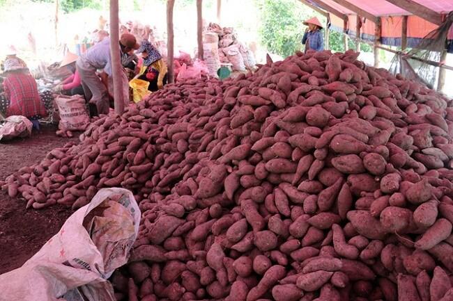 Hàng chục đặc sản, nông sản rớt giá thảm có loại chưa tới 1.000 đồng/kg