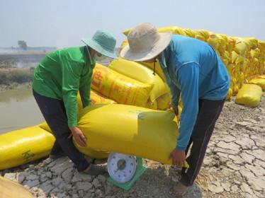 Giá lúa gạo hôm nay 9/6: Giá lúa gạo ổn định sau chuỗi ngày giảm sâu
