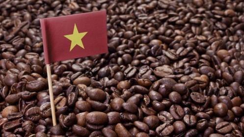 """Giá cà phê hôm nay 12/6: Thiếu động lực bứt phá, cà phê arabica không chống được """"gió ngược"""""""