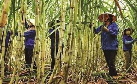Thái Lan muốn Việt Nam xem lại quyết định đánh thuế đường Thái Lan