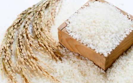 Giá lúa gạo hôm nay 28/6: Giá gạo nguyên liệu xu hướng giảm nhẹ