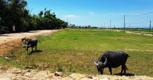 Giá nhà đất ở Huế tăng đột biến