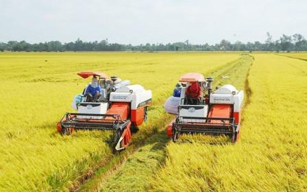 Giá lúa gạo hôm nay 17/7: Giá lúa tiếp tục giảm