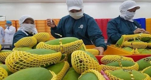 Xuất khẩu rau quả sẽ cán mốc 4 tỷ USD