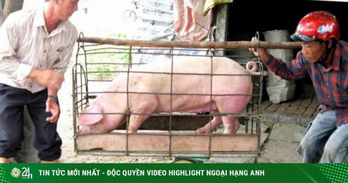 """Giá lợn, gà chạm đáy, ngành nông nghiệp """"tắc"""" tứ bề"""
