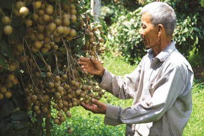 Ngăn chặn sự gián đoạn lưu thông nông sản