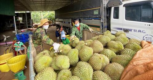 Sầu riêng Đắk Lắk vào mùa thu hoạch, chính quyền lập tổ hỗ trợ nông dân tiêu thụ