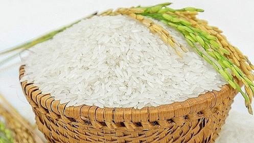 Giá lúa gạo hôm nay 7/8: Cuối tuần giá lúa gạo đi ngang