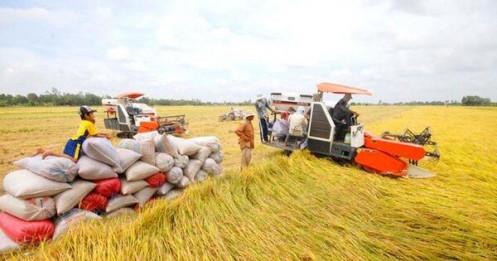 Lúa đầy đồng, giá giảm sâu, vì sao Vinafood I, Vinafood II 'án binh bất động'?
