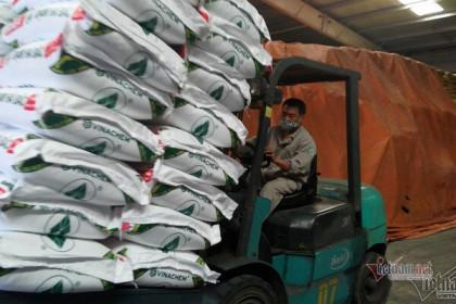 Nông dân đang khó khăn giá phân bón vẫn tăng mạnh