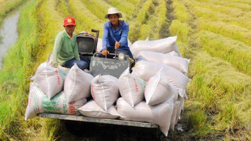 Yêu cầu ngân hàng hỗ trợ vốn cho thương nhân để tránh đứt gãy chuỗi cung ứng gạo