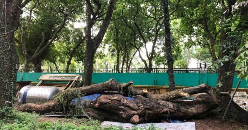 Hà Nội: Đấu giá trực tuyến 7 cây gỗ sưa được gần 235 tỷ đồng