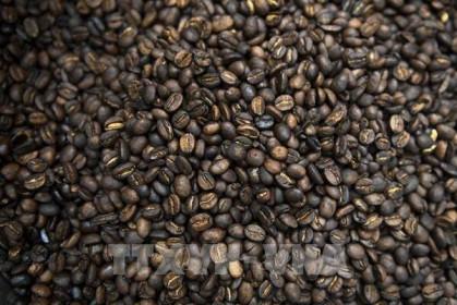 Giá cà phê hôm nay 13/8: Giảm nhẹ về mức 36.900 – 37.800 đồng/kg