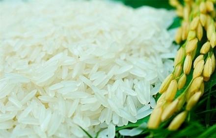 Giá lúa gạo hôm nay 13/8: Giá lúa đi ngang