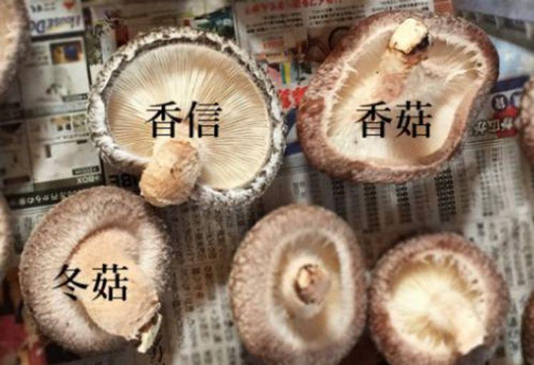 Nấm hương Nhật hơn 8 triệu đồng/kg, dân Hà Nội mua về xào rau