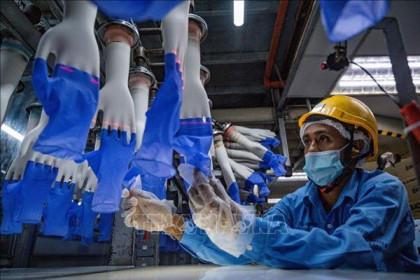 Xuất khẩu cao su của Malaysia tăng mạnh