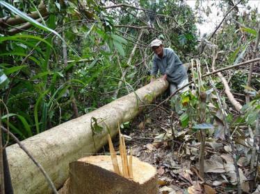 Phú Yên chính thức chấm dứt Dự án chuyển đổi 463 ha rừng sang mục đích khác