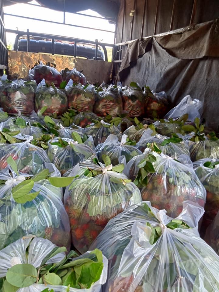 Chôm chôm chưa đến 5.000 đồng/kg, nhiều chủ vườn 'khóc ròng' vì Covid-19
